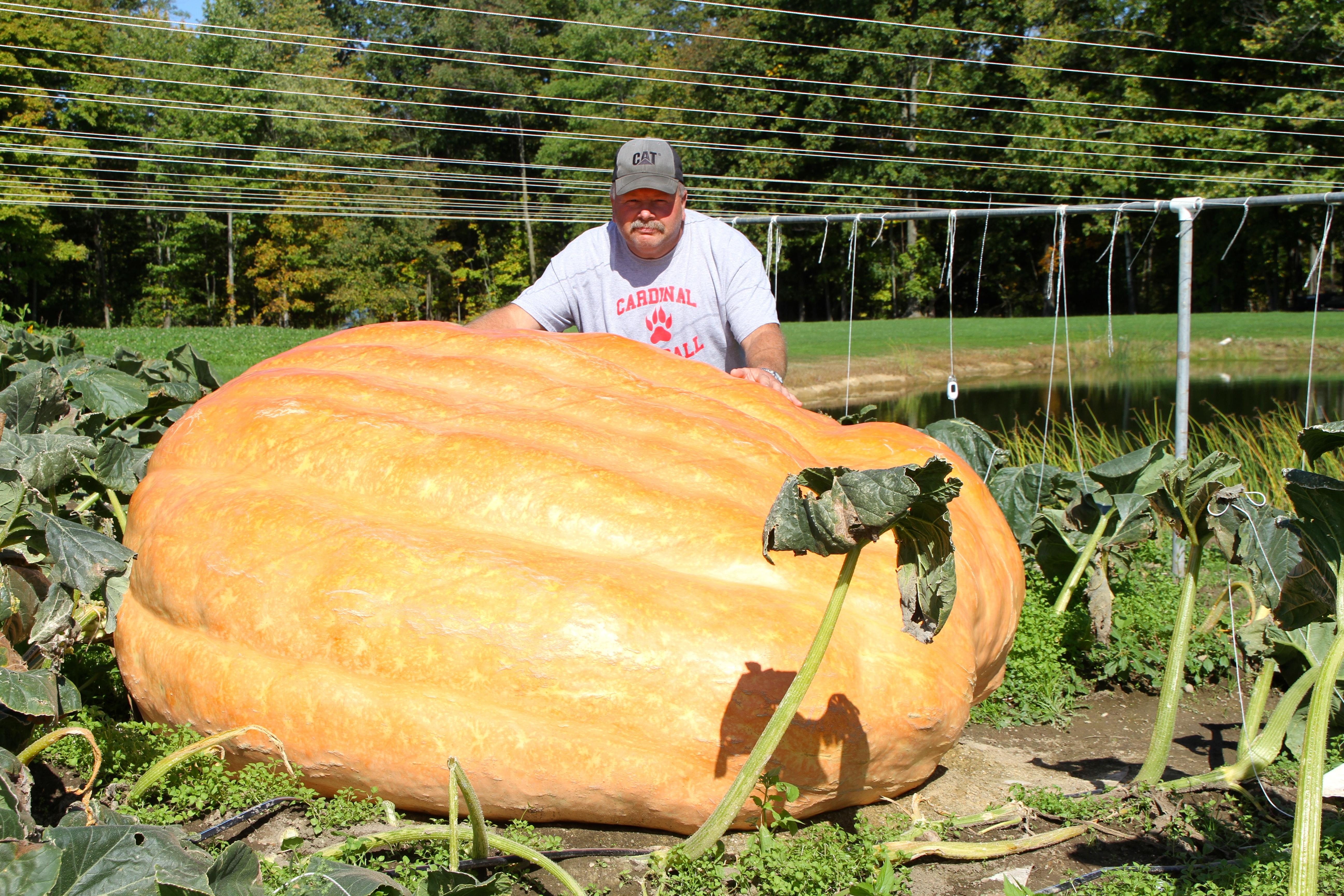pumpkin patch king county